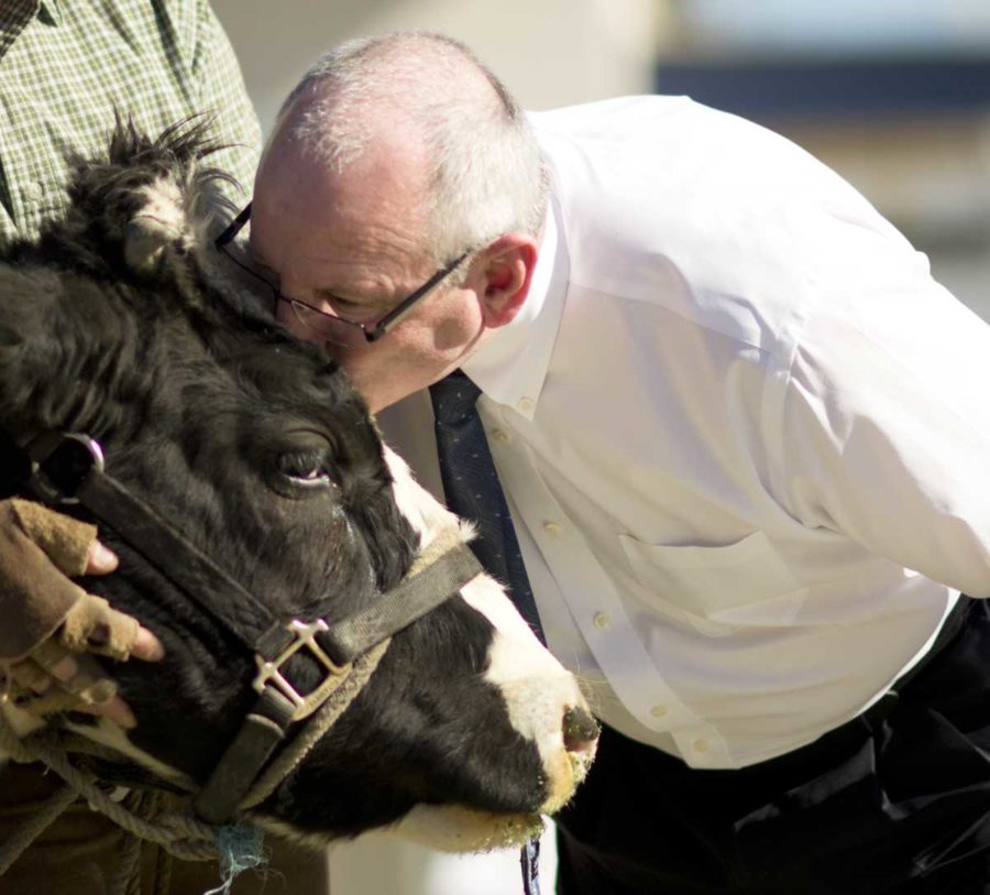 Both disappointing and delighting students, Principal Glenn Lipman smooches the cow on the forehead rather than on the lips.