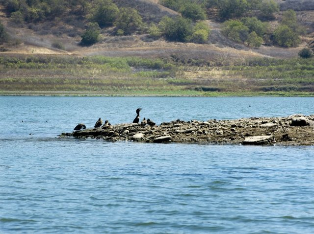 Dropping water levels at Lake Casitas reveal small