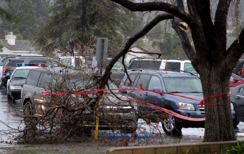 Red caution tape marks a fallen tree branch in front of the office building that struck Magnolia Hallie as she was headed to her economic class.