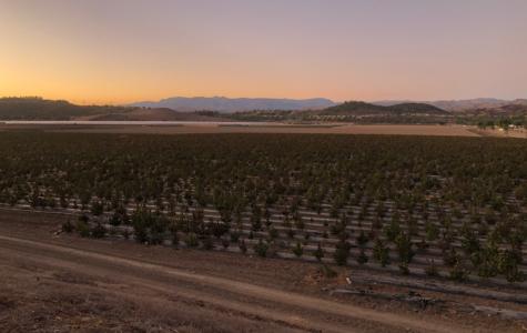 The New Industrial Hemp Fields in Camarillo