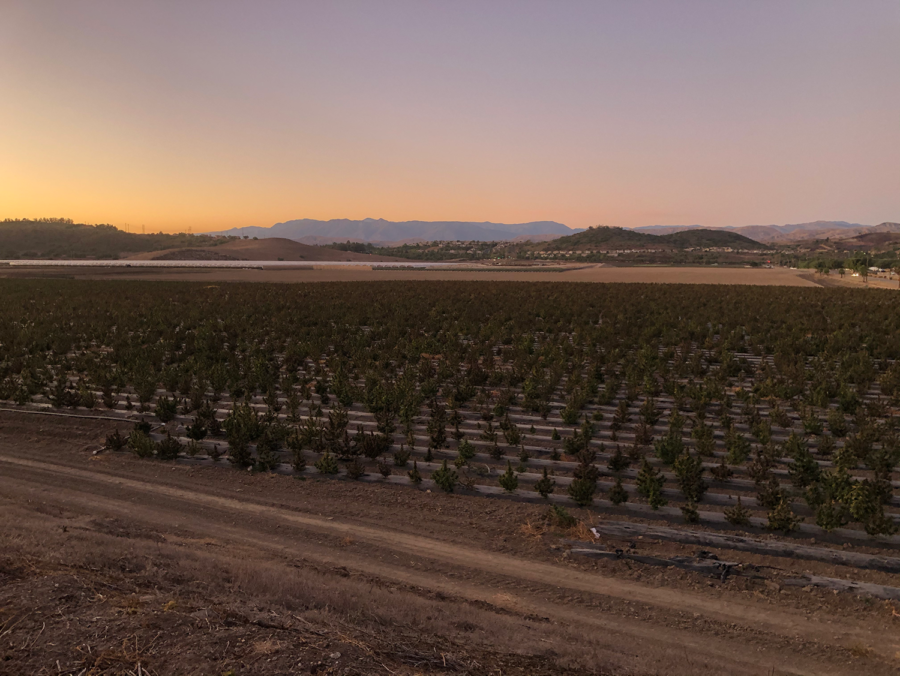 The New Industrial Hemp Fields in Camarillo
